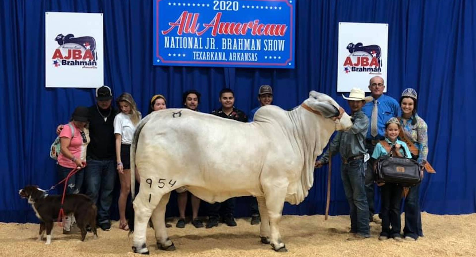 Moreno Ranches proudly announces Brahman heifer, bull wins on last day of All-American Junior Show